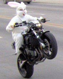 EVEN THE EASTER BUNNY IS EXCITED ABOUT THE BAYOU BOOGALOO!