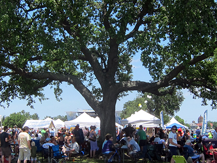 boogaloo-tree2014may17